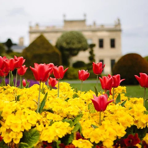 yellow flowers and red tulips are in the foreground. Brodsworth Hall is blurred, in the background